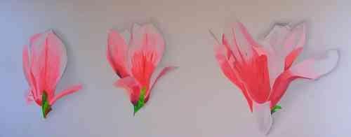 Leinwandbild Direkt Art HOSEUS, Magnolien Metamorphose 250x120