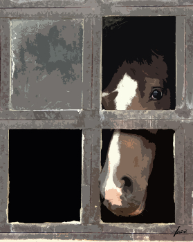 Pferd, 120x100, Acryl auf Leinwand HOSEUS, Leinwandbild Auftrags-Kunst
